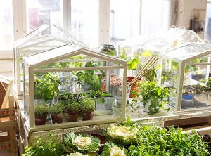 Ikea-Mini-Greenhouse1