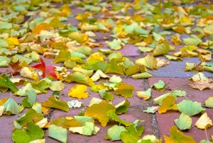 autumn_leaves_210504 copy