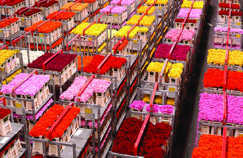 שוק הפרחים באלסמר (NBTC)
