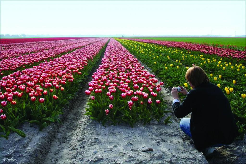 שדות צבעונים בצפון הולנד (NBTC)