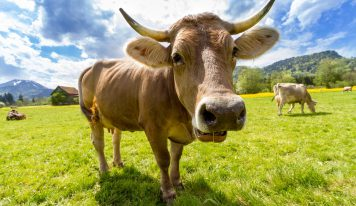 10 ביטויים שעושים כבוד לחלב ההולנדי