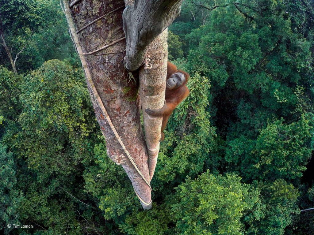 tim-laman-wildlife-photographer-of-the-year-grand-title-winner