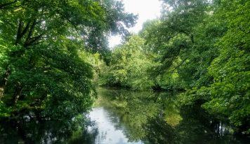 כך הולכים השותלים  –  סיפורו של יער אמסטרדם