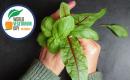 צמחונות – זה בטבע שלנו
